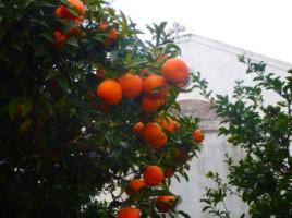 orangen in episkopi kreta