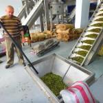 Olivenöl aus Kreta